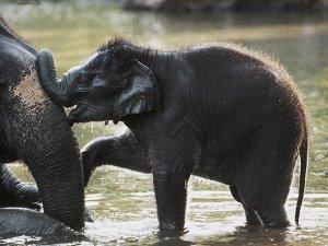 ABD ve Çin fildişi ticaretini yasaklayacak