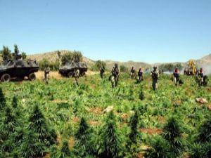 Geçen yıl Diyarbakır'da 89 ton esrar yakalandı