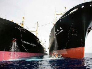 Antarktika'da 300'den fazla balina avlandı
