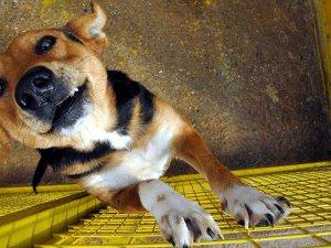 Tayvan'da kedi ve köpek eti yiyenlere para cezası verilecek