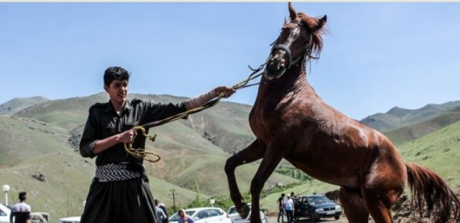 Sine'de 1. Kürt atı festivali başladı