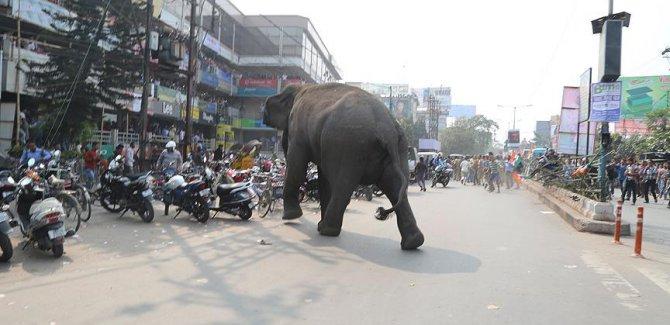 Hindistan'da fil dehşeti 14 kişi öldü
