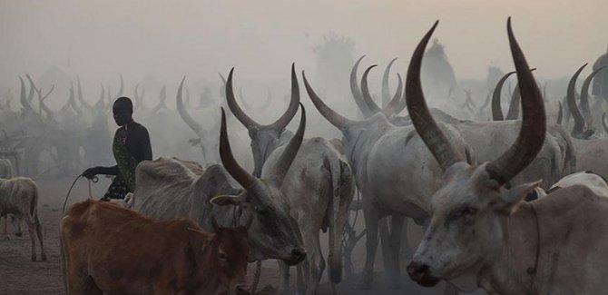 Sığır hırsızları hayvancılık yapan kabileye saldırdı: 40 ölü