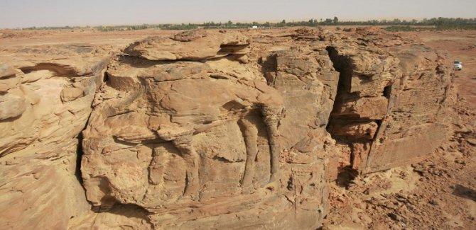 Suudi Arabistan çölünde 2 bin yıllık deve heykelleri keşfedildi