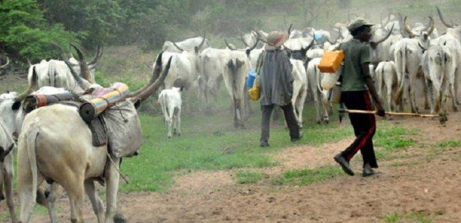Nijerya'da çobanlar ile çiftçiler yine çatıştı: 13 ölü