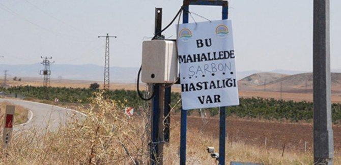 Diyarbakır'daki sağlık örgütleri: Bir çocuk şarbondan öldü!