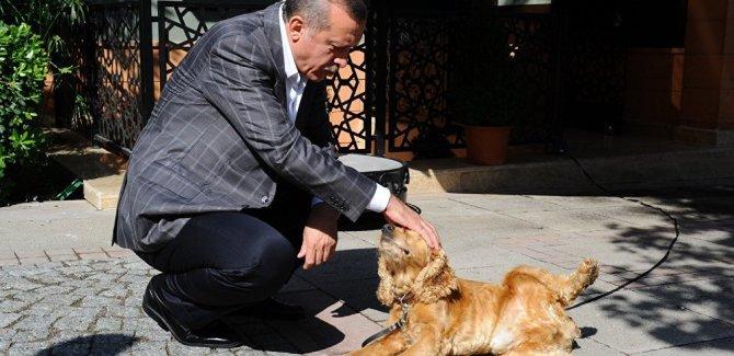 Erdoğan'dan hayvan hakları talimatı
