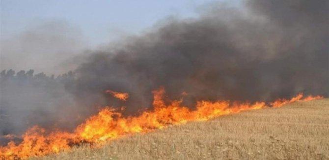 Kerkük'te Kürt çiftçilerin tarlaları yeniden ateşe verildi