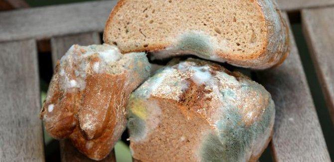 DSÖ: Her yıl 400 bin insan bozuk gıdadan ölüyor