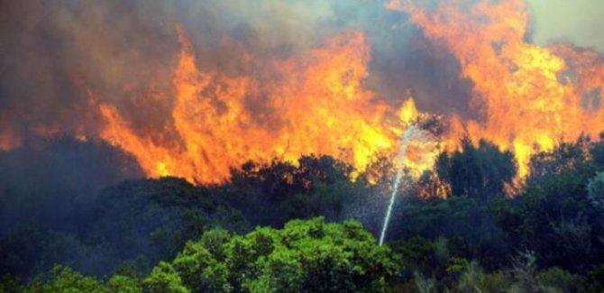 Bu yıl 16 milyon orman yangını meydana geldi