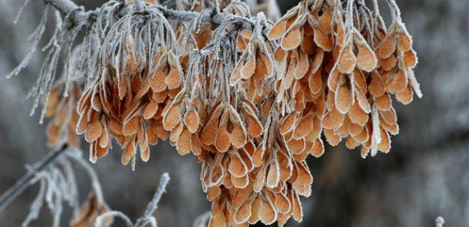 Doğu Anadolu'ya buzlanma, don ve sis uyarısı