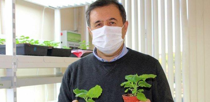 Kovid-19'a karşı 'yeşil bitki'den yerli aşı çalışmaları: Tüm mutasyonlara karşı en etkili 5 aşı adayı geliştirildi
