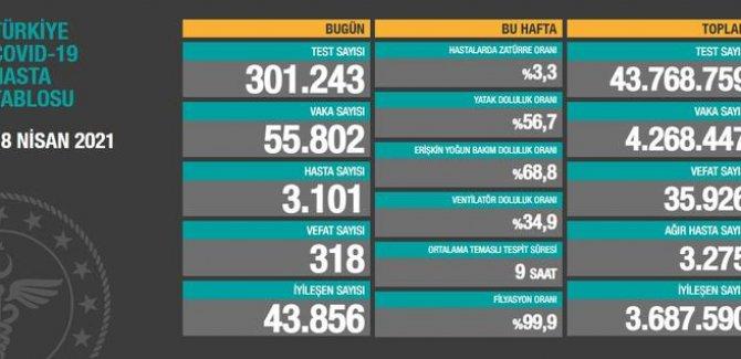 55 bin 802 yeni vaka tespit edildi, 318 vefat