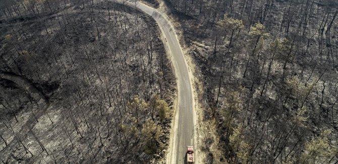 Erdoğan: Orman yangınlarından etkilenen alanlar 'Genel Hayata Etkili Afet Bölgesi' ilan edildi