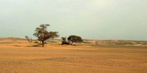 Sahra Çölü'nde 3'ü bebek 44 göçmen susuzluktan öldü