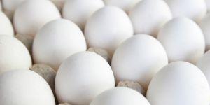 Zehirli yumurtalar Türkiye'de