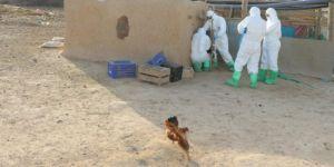 Kızıltepe'de kuş gribi alarmı