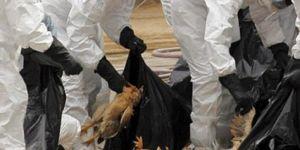 İran:25 milyon kümes hayvanı itlaf edildi