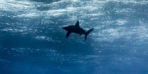 Okyanuslar bu yüzyıl 65 cm yükselecek