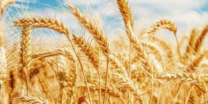 Kürt çiftçiler sorunu ABD ve BM'ye götürdü