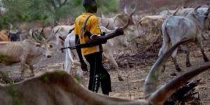 Çoban ve çiftçilerin bitmeyen kavgası: 30 ölü