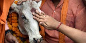 Hindular'dan İnek kesen Müslüman'a linç