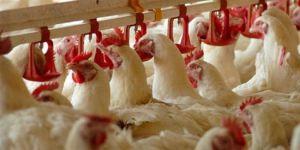 Türkiye Kasaplar Odası: Beyaz ete 8 ayda yüzde 200 zam geldi