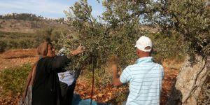 Siyonist yerleşimciler, Filistinlilerin zeytin ve üzüm ağaçlarına saldırdı