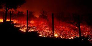 California'daki orman yangını 9 can aldı