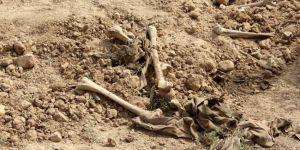 Irak'ta yeni bir toplu mezar bulundu