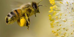"""""""Önümüzdeki 100 yıl içerisinde böcek türleri yok olabilir"""""""