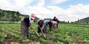 Türkiye'de çiftçi sayısı 10 yılda yüzde 38 düştü