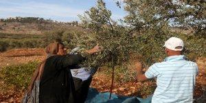 İşgalci Yahudi yerleşimciler herşeye zarar