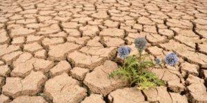 Rapor: Küresel ısınma gıda zincirini tehlikeye sokabilir