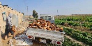 Irak'ta kuş gribi alarmı; Kürdistan Bölgesi tedbirler için harekete geçti