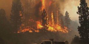 Li Californiya heya niha 15 hezar hektar zevî şewitîn